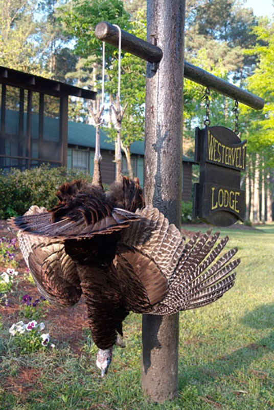 Turkey Hunting in Alabama at Westervelt Lodge