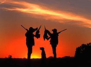 Pheasant Hunting in Alabama